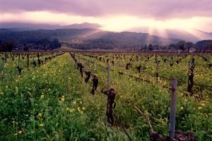 Napa Valley Sunset, Oakville, California by George Oze