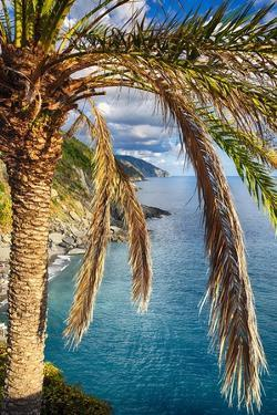 Palm Tree on the Hillside, Vernazza, Italy by George Oze