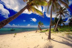 Palm Trees, Grand Cayman Island by George Oze