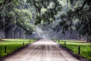Plantation Road, Charleston, South Carolina by George Oze