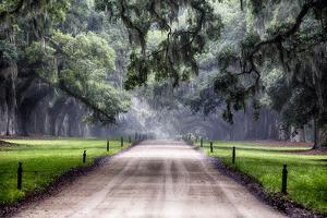 Plantation Road, Charleston, South Carolina by George Oze