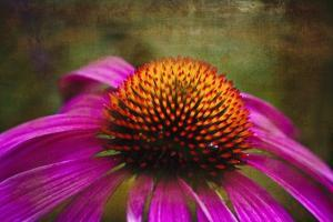 Purple Coneflower on Canvas by George Oze
