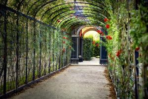 Rose Trellis In Schonbrunn Palace by George Oze