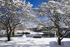 Snow Covered Trees at Riverside by George Oze