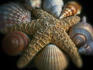 Starfish and Sea Shells by George Oze