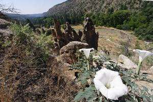 Valley View, Bandelier National Monument, NM by George Oze