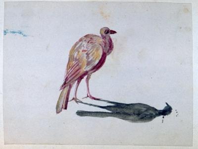 Bird, 1820-1876