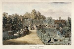 Zoological Gardens, Regent's Park, London, 1835 by George Scharf
