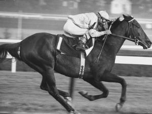 Horse of the Year, Kelso, Racing by George Silk