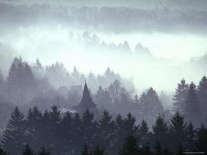 Mist and Fog Shrouded Countryside of the Northern Ardennes Forest, During the Battle of the Bulge by George Silk