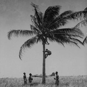 """Australian Pilot Lisle Johnston Showing American B-17 Bomber """"Frank Buck"""" How to Gather Coconuts by George Strock"""