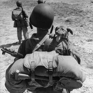 US Marine Jesse Goin Carrying His Dog Towards the Front During the Fighting on Kwajalein by George Strock