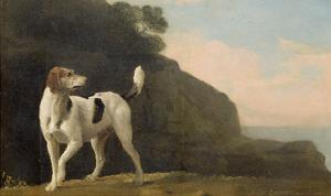 A Foxhound, C.1760 (Oil on Paper Laid on Board) by George Stubbs