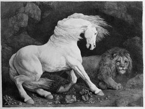 A Horse Affrighted by a Lion, Engraved by the Artist, 1788 (Etching) by George Stubbs