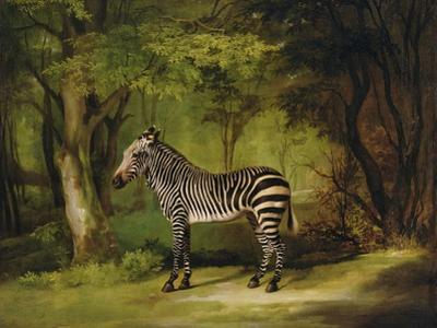 A Zebra, 1763 by George Stubbs