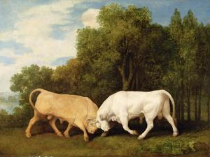 Bulls Fighting, 1786 (Oil on Panel) by George Stubbs