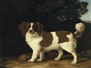 Fanny, the Favourite Spaniel of Mrs. Musters, Standing in a Wooded Landscape, 1777 by George Stubbs