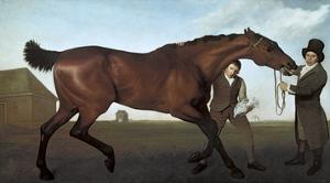 Hambletonian by George Stubbs