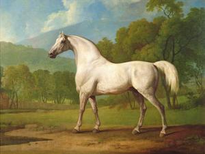 """Mambrino"", C.1790 by George Stubbs"