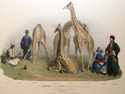 The Giraffes with the Arabs, 1836