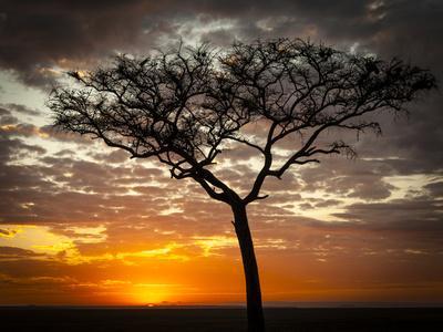 Africa, Kenya, Masai Mara, sunrise