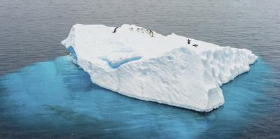 Antarctica, Gentoo, penguins, iceberg by George Theodore
