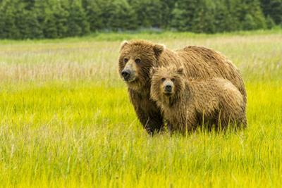 USA, Alaska, Grizzly Bear with Cub by George Theodore
