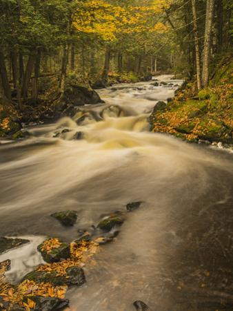 USA, Michigan, Fall Colors, Stream by George Theodore