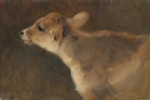 A Calf, 1879 by George Wiliam Horlor