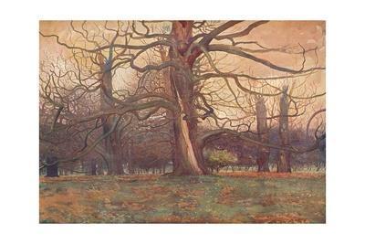 'Study of an Oak Tree', c1878 (1903-1904)