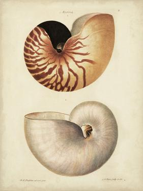 Antique Nautilus I by George Wolfgang Knorr