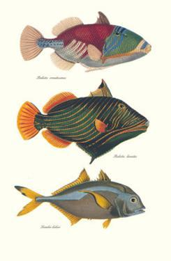 Tropical Fish by Georges Cuvier