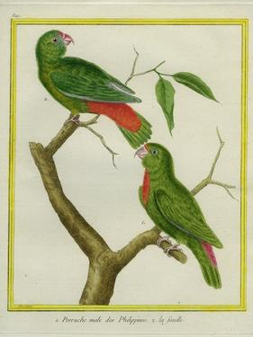 Male and Female Philippine Hanging Parrots by Georges-Louis Buffon