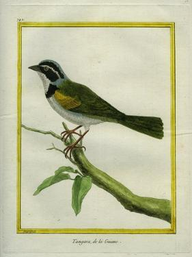 Palm Tanager by Georges-Louis Buffon