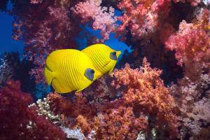 Coral Reef Scenery with Butterflyfish by Georgette Douwma