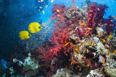 Coral Reef with Butterflyfish by Georgette Douwma