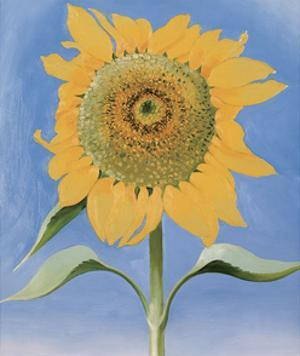 Sunflower, New Mexico, c.1935 by Georgia O'Keeffe
