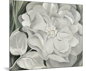 The White Calico Flower, c.1931 by Georgia O'Keeffe