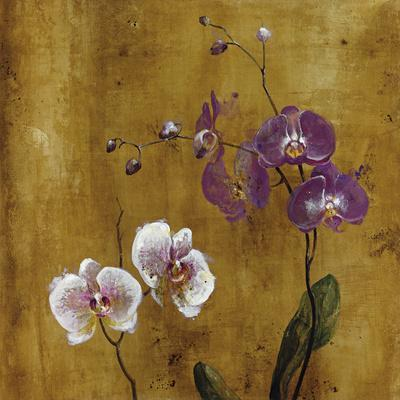 Orchid Bloom I