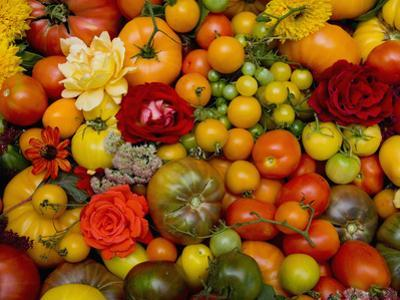 The Tomato Festival in Santa Rosa, California, Local Fruit and Vegtables by Gerald & Buff Corsi