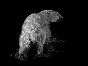 Polar Bear by Geraldine Aikman