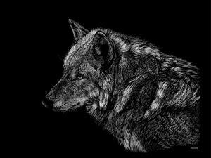 Wolf by Geraldine Aikman