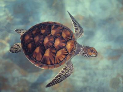 Green Turtle, Java, Indian Ocean by Gerard Soury