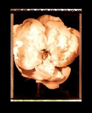Beautiful Flower III by Gerard Van Hal