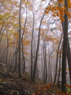 Austria, Lower Austria, Peilstein (Mountain), Autumn Forest, Fog, Footpath by Gerhard Wild