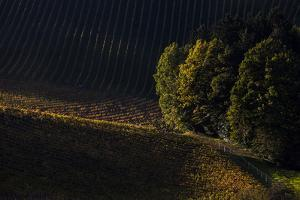 Europe, Austria, Styria, South-Styrian Wine Route, Vineyards in the Last Sunlight by Gerhard Wild