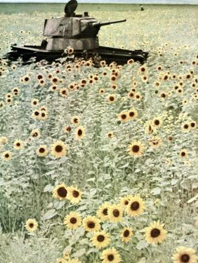 Operation Barbarossa, 1942 by German photographer