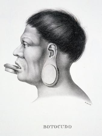 Native Man of the Botocudo Tribe, with Plug Face Decoration, from 'Atlas of a Journey in Brazil'…