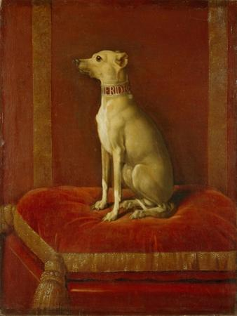 One of Frederick Ii's Italian Greyhounds by German School