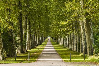 https://imgc.allpostersimages.com/img/posters/germany-baden-wurttemberg-unterer-schlossgarten-lower-castle-gardens_u-L-Q11YGM10.jpg?p=0